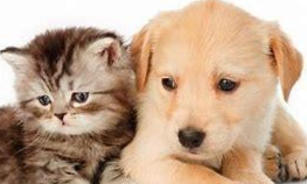 Arrêtons la maltraitance animal
