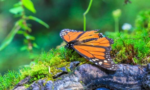Pétition : Dans 100 ans, tous les insectes pourraient avoir disparu