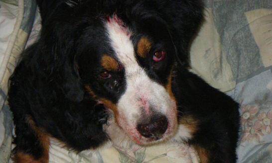 Pour des sanctions plus fortes lors de maltraitances animales
