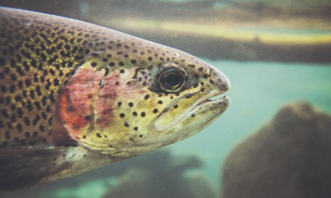 Pétition : Maintient de la pisciculture du Lac des Écorces