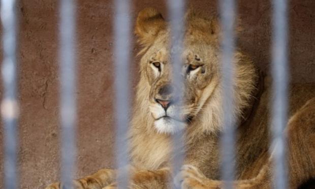 Pétition : Non au cirque/zoo à Nîmes ville active-zone géant