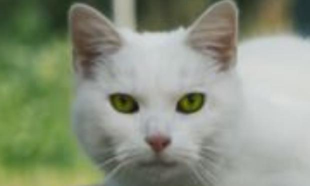 Aidez nous à sauver le chat feu vert