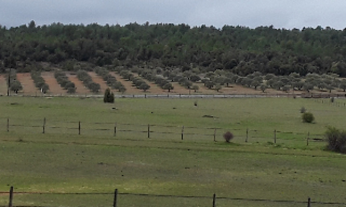 Stop à  la déforestation pour des parcs photovoltaïques
