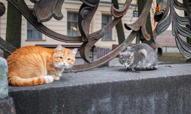 Stérilisation des chats libres de Gannat 03