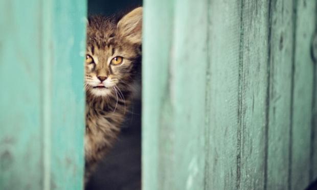 Pour la libération d'un chat enfermé dans un hangar !
