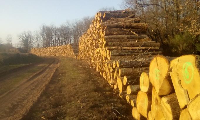 Stoppons la coupe des arbres du bois de l'aiguillon près de Feusines, dans l'Indre