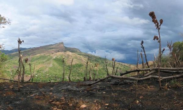 Non à la déforestation en Afrique centrale