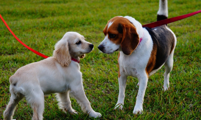 Création d'un parc canin pour ville de Le Pin
