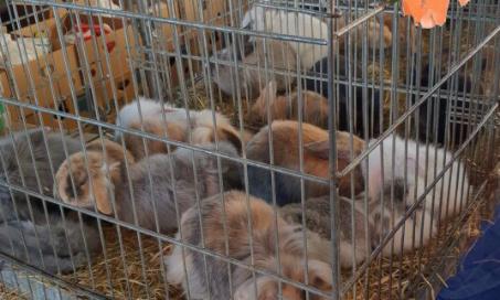 Pétition : Je souhaite l'arrêt total de la vente d'animaux sur le marché de la batte