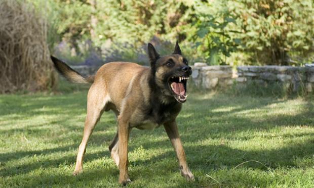 Pétition : Nuisances canines