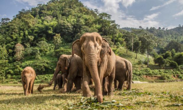 Non à l'abattage de 500 éléphants du «Zimbabwe»
