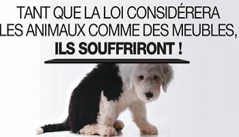 Pétition : Droits des animaux : demandons au Sénat la réattribution de la qualité d'être sensible !