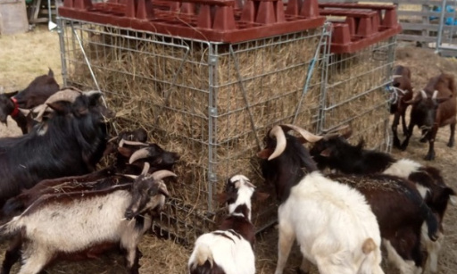 Pour que nos amis les chèvres reste à lit et mixe sablière