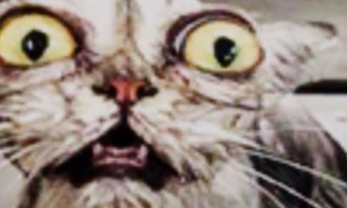 Aider le chat de melvin