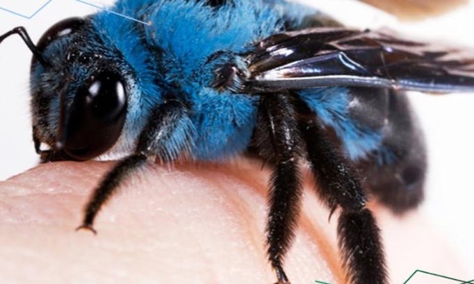 Les abeilles devraient s'habiller en bleu