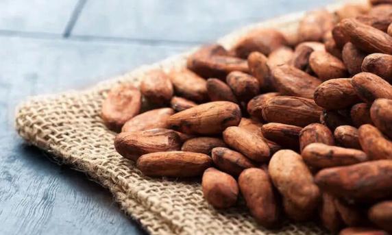Para uns cultura durable, no a la experimentation con cacao transgenica