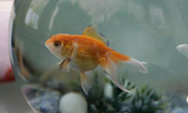 Stop à la maltraitance des poissons banalisée !