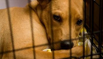 Pétition : Non au projet de laboratoire pratiquant des expérimentations sur les animaux au sein du CEA de Fontenay-aux-Roses !