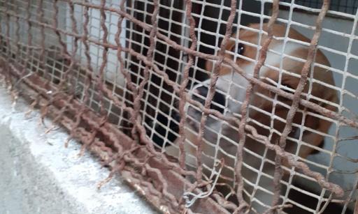STOP A LA MALTRAITANCE DES ANIMAUX DE L'ACPA-SPA DE SAINT-GAUDENS : LA DESTITUTION DE LA PRESIDENTE RECLAMEE