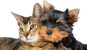 Pétition : Stop au commerce des animaux domestiques par les particuliers !