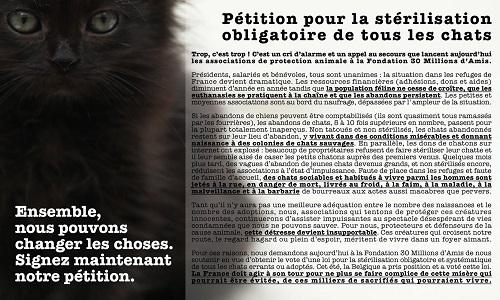 Pétition : Une urgence : pour la stérilisation obligatoire de tous les chats domestiques et errants en France !
