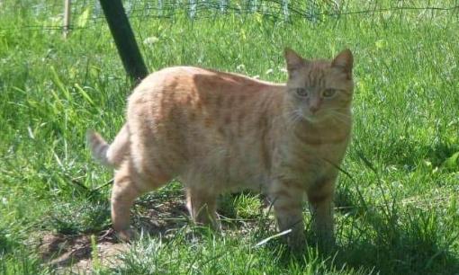 Mobilisons-nous pour les chats qui disparaissent à Sepvigny