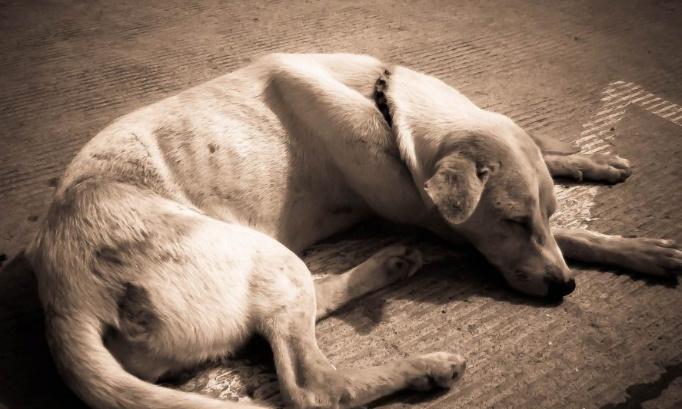 Arrêtons la maltraitance animale