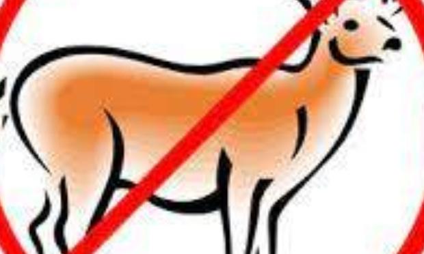 Au secours ! Il faut d'urgence réguler les populations de cervidés, chevreuils et sangliers.