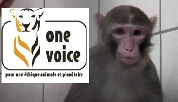 Pétition : Pour la libération des 7 macaques français détenus en Allemagne