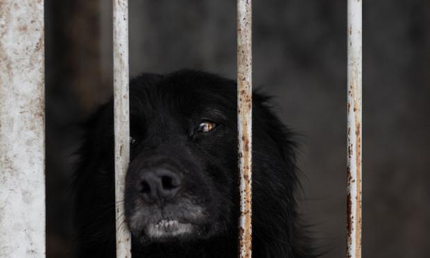 STOP à la maltraitance des chiens sans collier en fourrière ATPA-SPA de Toulouse. STOP à la souffrance physique et morale des chiens enfermés 24h/24h