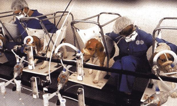 Présence d'un logo certifiant que le produit est élaboré (au moins dans une de ces étapes de la fabrication) grâce à l'expérimentation animale.
