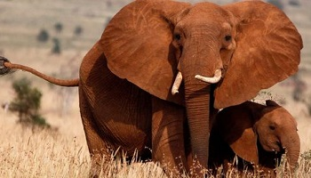 Petition : Elephants trained to sniff explosives, it must be stopped!