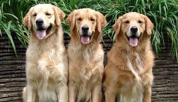 Pétition : Condamnez la personne qui a attaché son chien et roulé avec en le laissant traîner !
