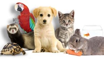 """Résultat de recherche d'images pour """"langage des animaux"""""""