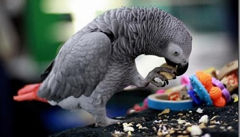 Petition : Stop the poor conditions that parrots are subjected to live in!