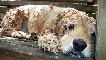 Petition : Petition for a more severe sentence against the abuse of animals