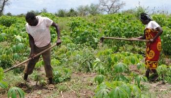 Pétition : Des milliers de paysannes et de paysans chassés de leurs terres : STOPPONS LA NOUVELLE ALLIANCE  DU G7 !