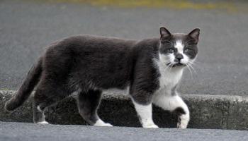 Pétition : Prolifération des chats : stérilisation oui, euthanasie non !