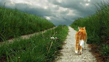 Pétition : Stoppons la reproduction, l'abandon, la mise à mort des chats domestiques, libres et errants en Suisse !