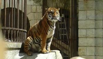 Pétition : Contre l'utilisation d'animaux sauvages dans l'émission Fort Boyard !