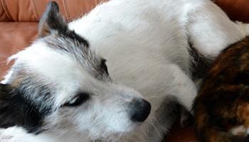 Pétition : Stop à la souffrance animale