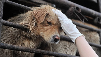 Petition : Stop Yulin