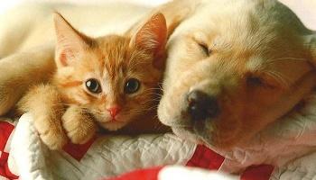 p tition diminuer le prix pour acheter un chat ou un chien la spa. Black Bedroom Furniture Sets. Home Design Ideas