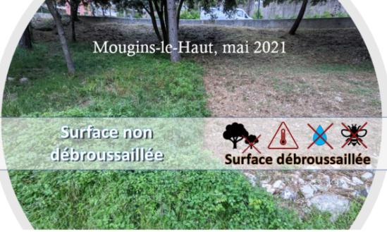 Pour un débroussaillement raisonné de la Nature sur Mougins-le-Haut et ses alentours