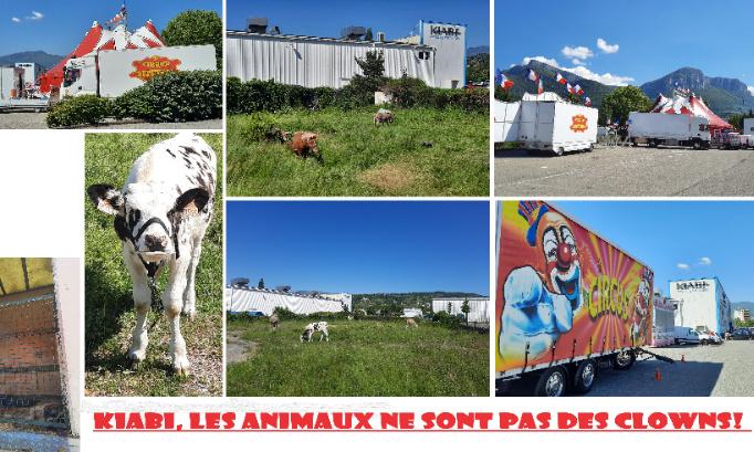 KIABI: STOP aux Cirques AVEC Animaux sur vos parkings!