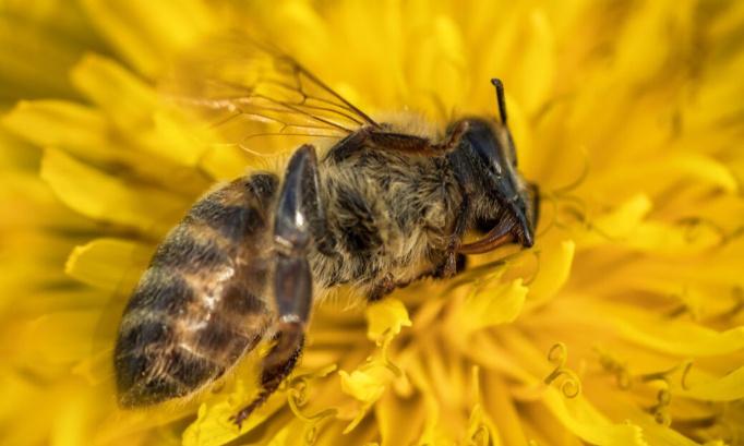 Stoppons l'extermination des abeilles, stoppons le retour des néonicotinoïdes !