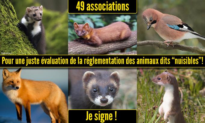 Pétition : Pour une juste évaluation de la réglementation des animaux dits « nuisibles »