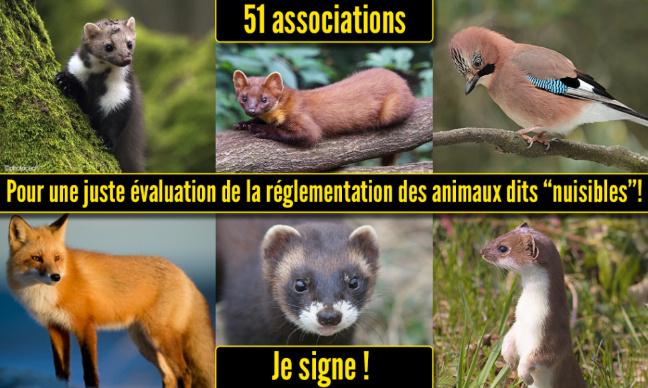 Pour une juste évaluation de la réglementation des animaux dits « nuisibles »
