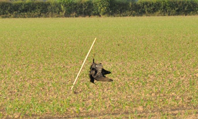 Arrêtons définitivement les potences à corbeaux dans nos campagnes