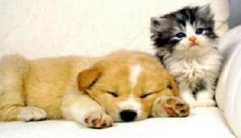 Pétition : Que les peines soient plus sévères envers la maltraitance des animaux !